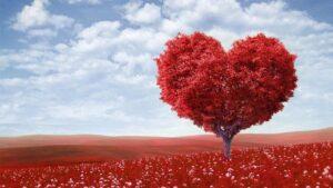 Valentines dag @ Myrehøj B&B